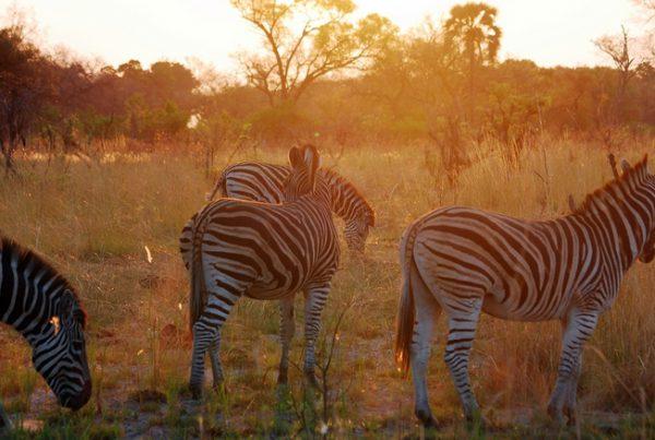 viaje_a_botswana