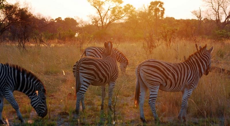 Botswana: un paraíso más allá de los safaris y cacerías
